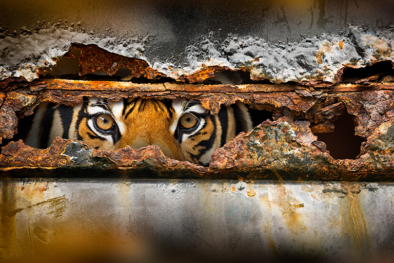 Inflation: Whose tiger and whose tail?